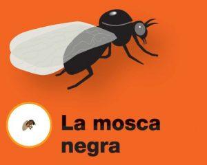 Los farmacéuticos recomiendan extremar las precauciones frente a la mosca negra